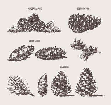 Set pine cones design elements drawn vector sketch