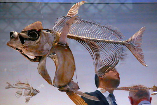 Visitors look at the skeletons of fish that are on display as part of an exhibition showcasing 100 artefacts, from a collection of around 18.5 million, that are stored at the Australian Museum in Sydney