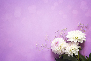 Purple background with white dahlias flowers. Copy space.