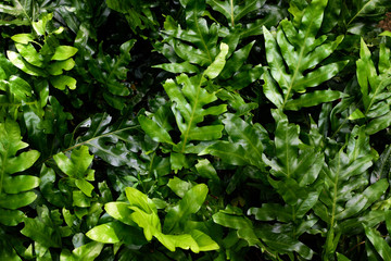 Tropical green leaves in natural light and shadow with green toned color and selective focus.Low key lighting Nature background.
