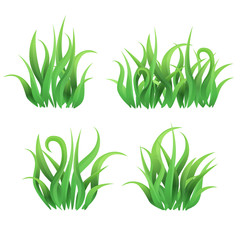 Vector grass butches on white background / Green curly grass collected in butches