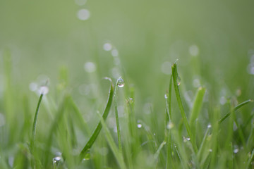 macro photography picture of dew drops on bright green grass taken on South coast England UK