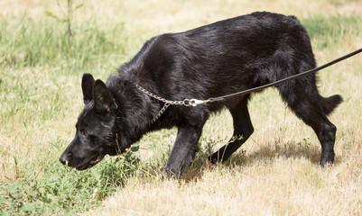 a portrait of a thoroughbred dog
