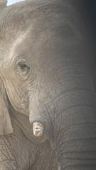 Nahaufnahme Elefant, Namibia