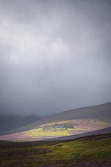 The highest youth hostel in Britain Skiddaw House surrounded by the purple heather and dark clouds
