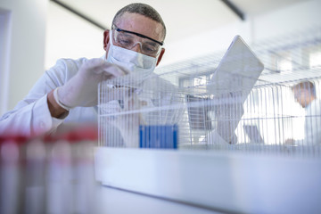 Laboratory worker holding digital tablet, looking into cage containing white rat