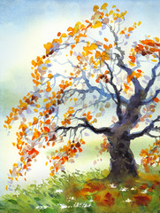 Watercolor landscape. Old autumn tree in foggy day