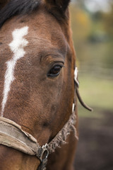 Face of a horse close-up on the right side of the frame