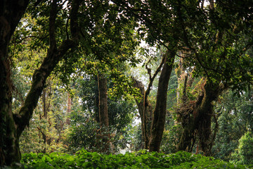 Rain forest at Inthanon mount, Chiang Mai, Thailand