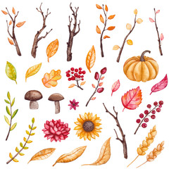 Autumn Set of Watercolor Leaves, Tree Branches, Flowers and Mushrooms