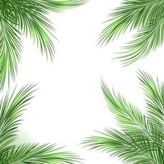 Palm leaves frame. Palmtree green leaf tropical beach border on white background, vector illustration