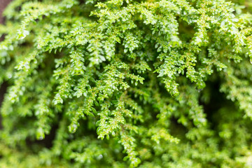 Soft Focus green mos