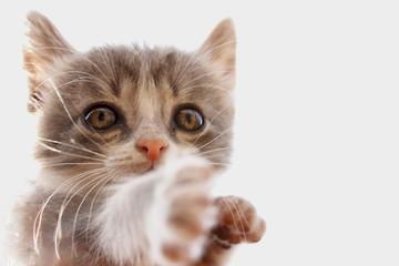 Portrait of a striped gray kitten against a blue sky.