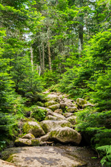 Trail to Summit 2