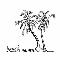 Palm trees hand drawn outline sketch. Two exotic trees isolated on white background.