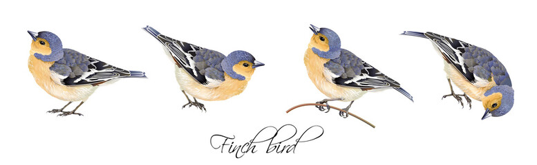 Finch bird illustrations set Fotomurales
