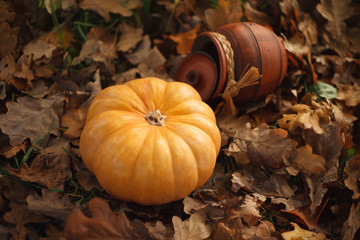 Orange pumpkin and a clay pot are on fallen leaves