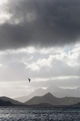 Island mountains near Caribbean sea with bird in flight