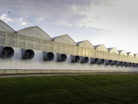 Large Scale Industrial Greenhouse on Large Indoor Agricultural Farm in Ontario