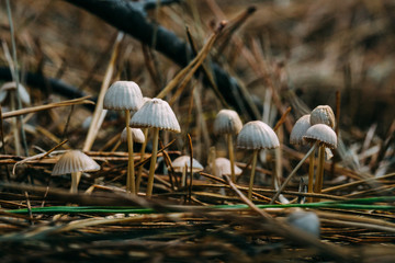 Mushrooms in a wood