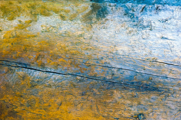 Slice of wood with annual rings. Abstract texture or background