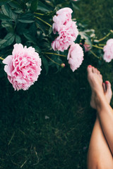 overhead of peonies and a woman's legs