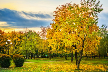 The yellow trees in a autumn park . Beautiful nature scenery with cloudy evening sky. Autumn leaf fall.