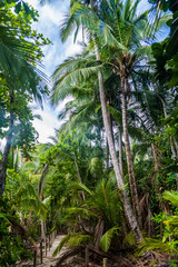 Palm forest in National Park Manuel Antonio, Costa Rica