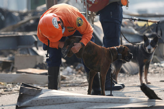 A cadaver dog handler with the Alameda County Sheriff's Office Search and Rescue Team checks the dog's paws during a search for two missing people amongst the ruins at Journey's End Mobile Home Park destroyed by the Tubbs Fire in Santa Rosa, California