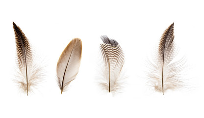 set of beautiful fragile little bird feathers isolated on white background