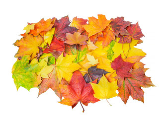 A pile of colorful autumn maple leaves