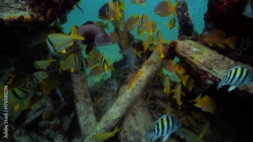 Underwater POV exploring tropical fish around the USS Spiegel Grove wreck, in the Florida Keys.