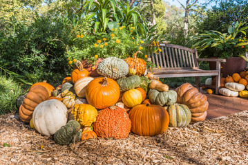 Mound of pumpkins and gourds in the morning sunlight