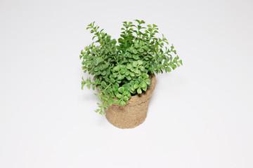 植物 観葉植物