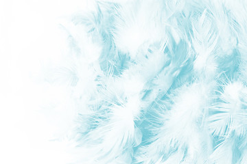 green turquoise vintage color trends chicken feather texture background