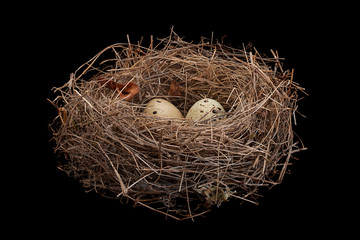 Birds nest with eggs