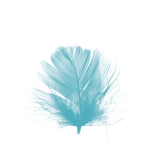 feather color turquoise emerald green on white background