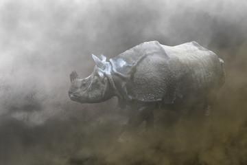 rinoceronte nebbia