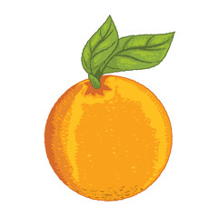 Isolated Orange with leave -Vector Illustration