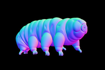 tardigrade, water bear isolated on black background