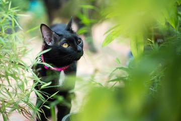 Black cat in autumn close up photo