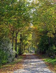 Fahrradweg im Herbst