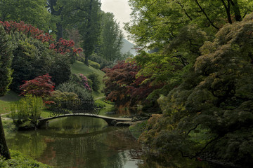 Lake Como; Bellagio, villa Melzi gardens, oriental garden with red maple and water lily