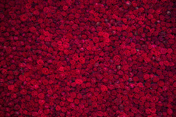 Red Roses Wall