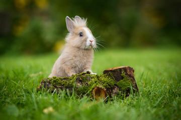Little rabbit in summer