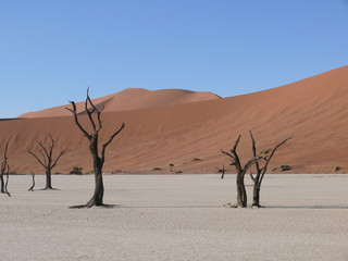 Dunes and dead trees in the Namib Desert in Namibia in Africa