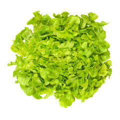 Green oak leaf lettuce from above isolated over white. Also called oakleaf, a variety of Lactuca sativa. Green butter lettuce with distinctly lobed leaves with oak leaf shape. Macro closeup photo.
