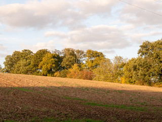 agricultural brown ploughed field empty tree line sky sunlight shadow