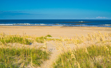 Sand dunes at the ocean cost