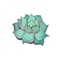 Elegant Botanical illustration with the image of the Mexican succulent rosette plant Echeveria. Isolated hand drawn vector clip art on a white background. Hipster trendy floral motif.